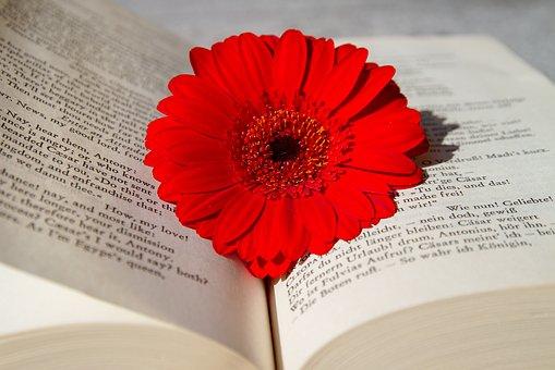 פרח אדום וספר